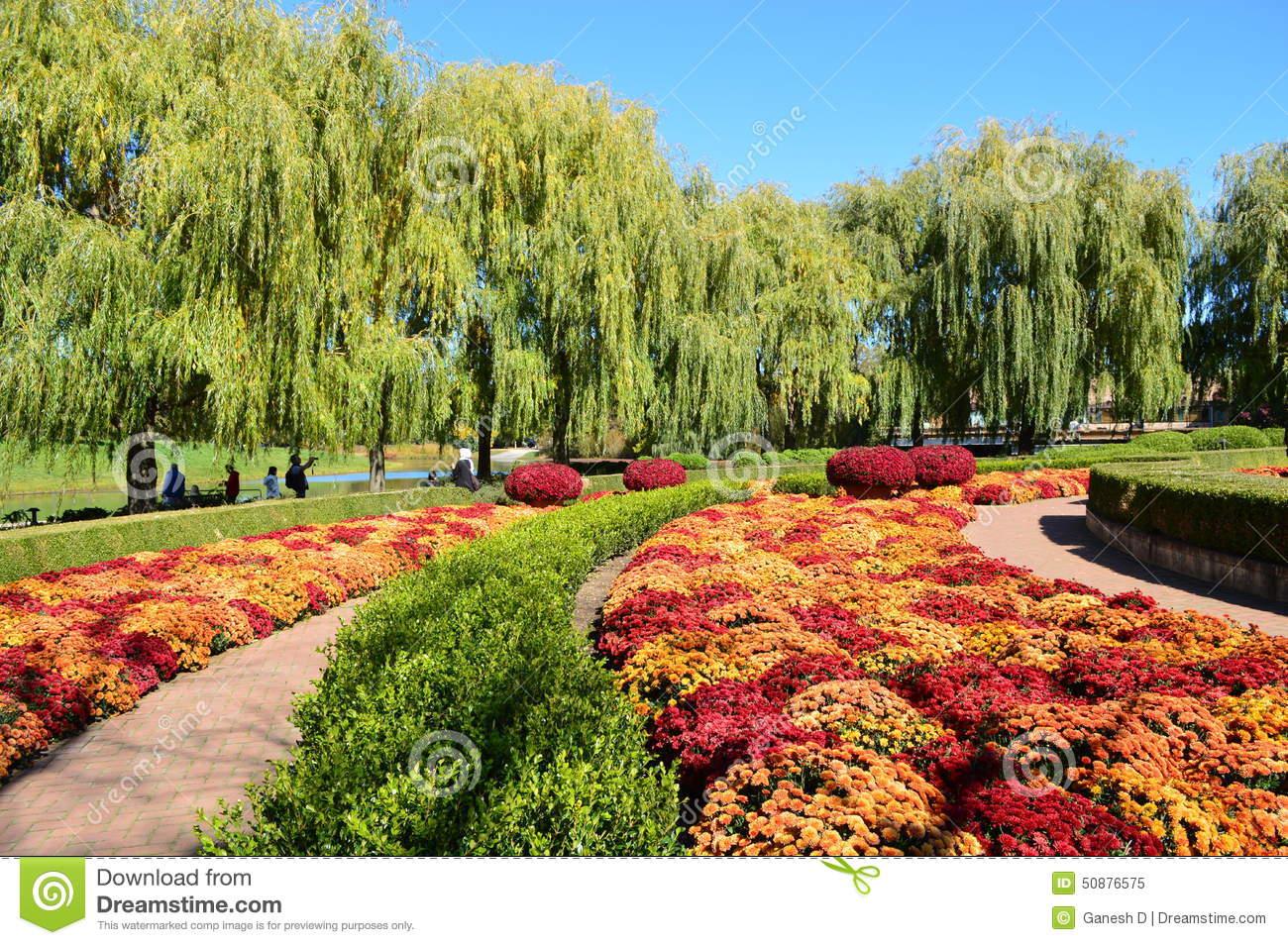 Fall Mums At Chicago Botanic Garden Stock Photo.