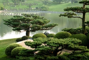 Stock Photo of Sequoia Tree At Japanese Garden.