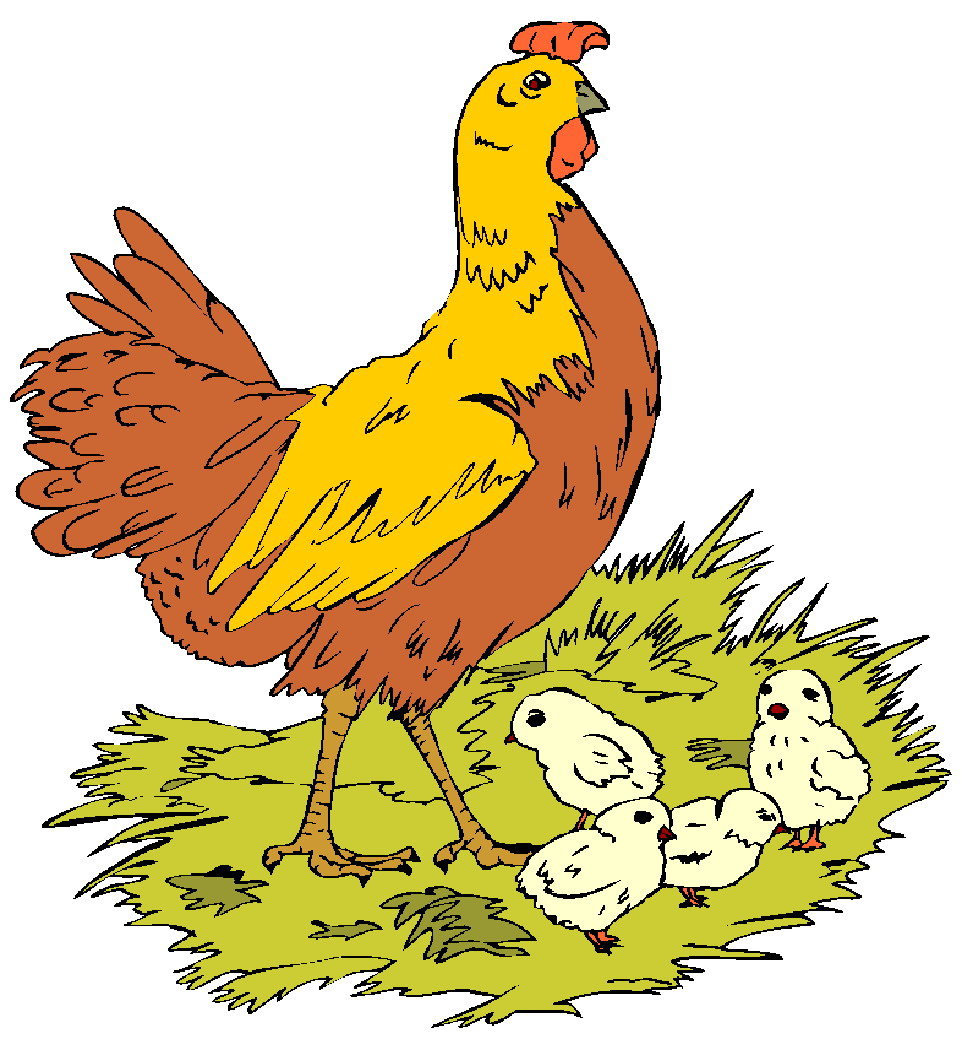 Chicks and hens clipart.