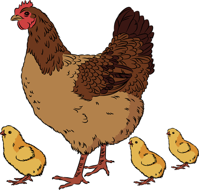 Clipart hen and chicks.
