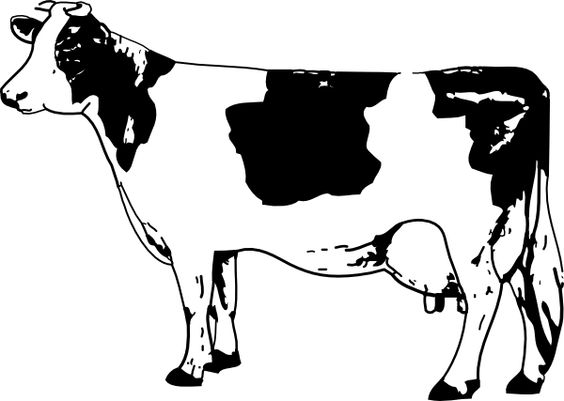 Chick fil a cow clipart.