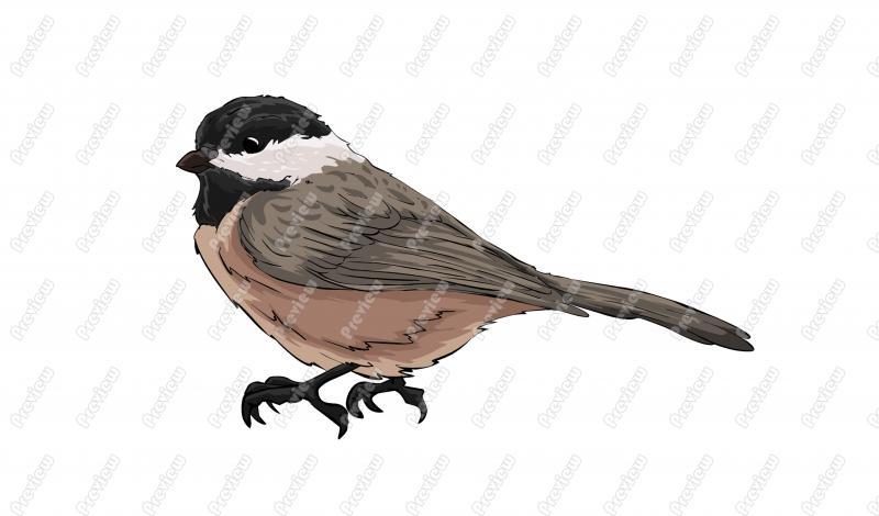 Chickadee Character Clip Art.