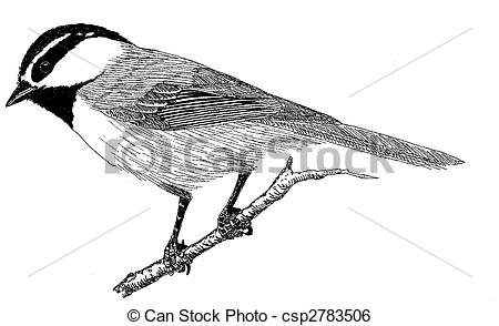 Chickadee Illustrations and Clipart. 198 Chickadee royalty free.