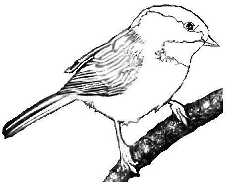 Chickadee Clip Art.