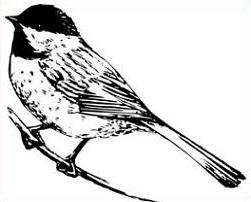 Free Chickadee Clipart.