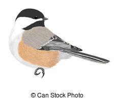 Chickadee clipart 1 » Clipart Station.