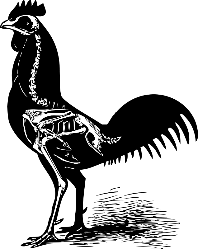 Free Clipart: Chicken skeleton.