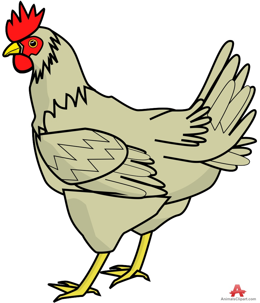 Chicken clipart images.