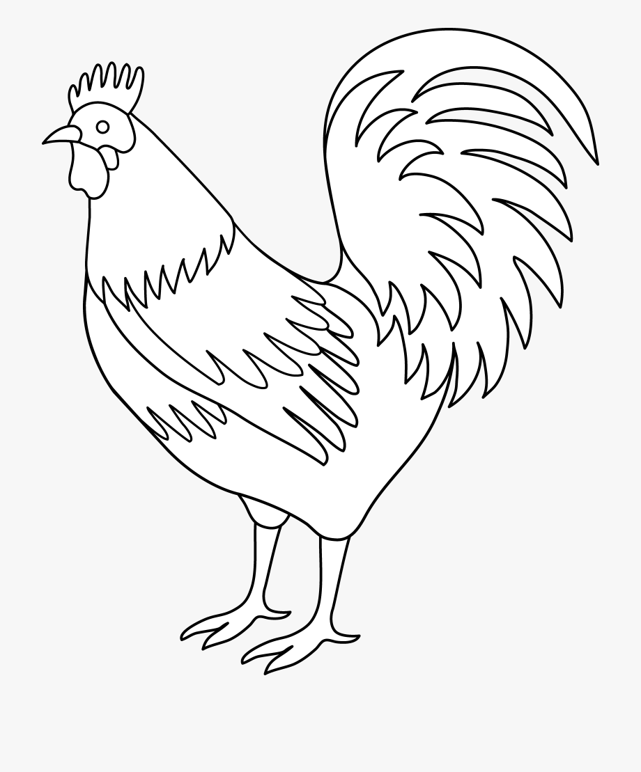 Chicken Clipart Tail.