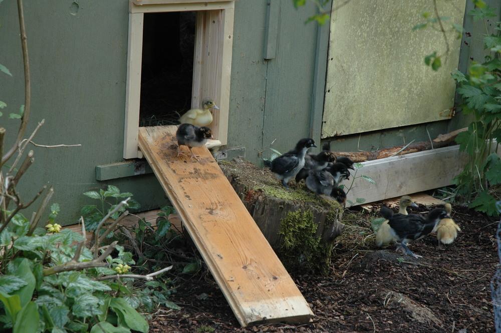 Coop Showcase — Automatic Chicken Coop Door.