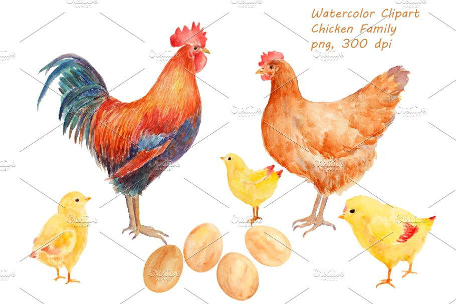 Watercolor Clipart Chicken Family.