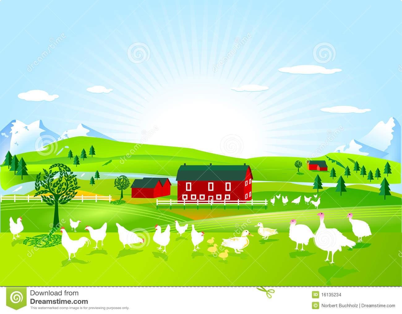 Poultry Farm Stock Images.