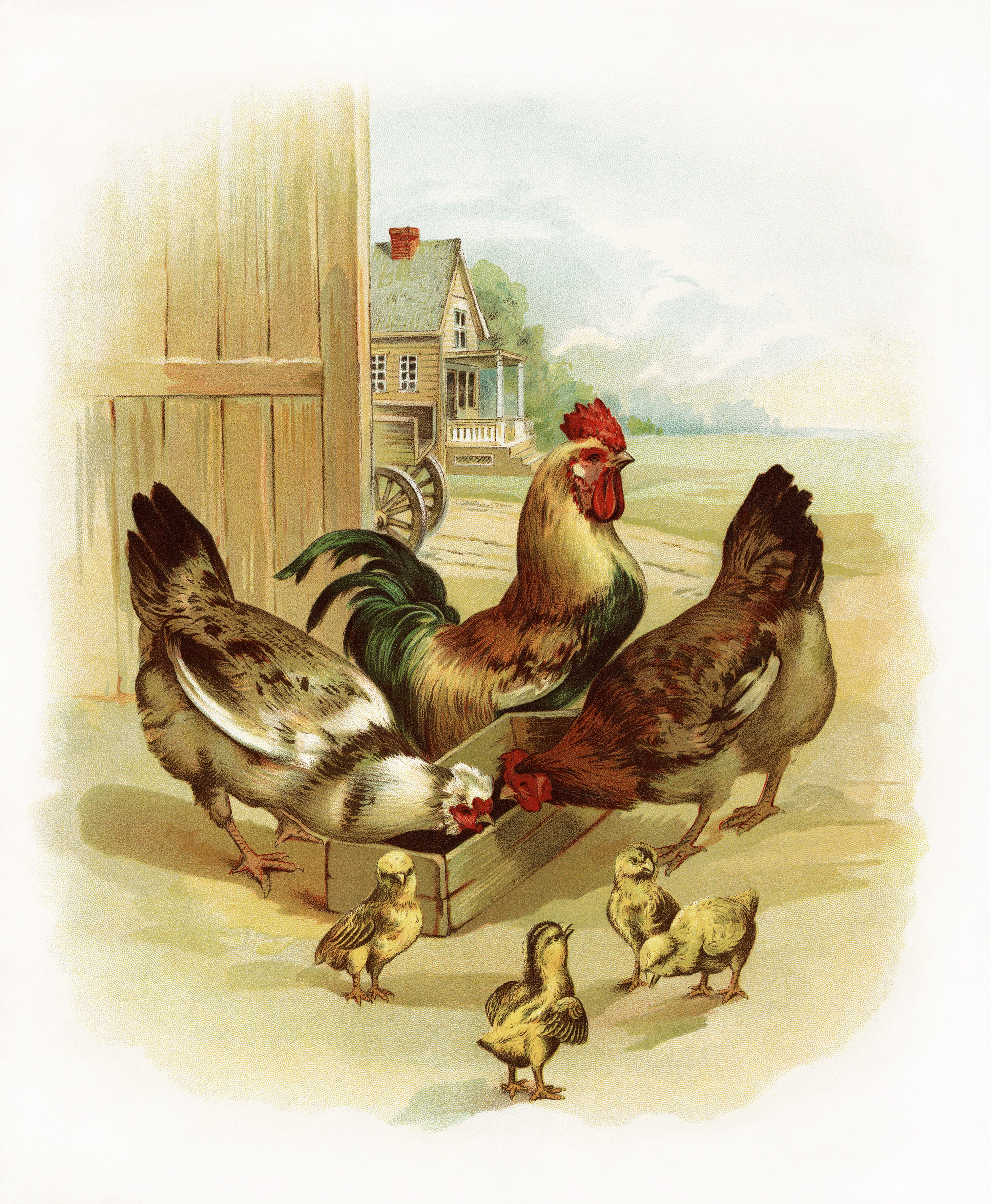 Free Vintage Image ~ Rooster, Chickens and Chicks at the Farm.