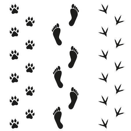 366 Chicken Footprint Stock Illustrations, Cliparts And Royalty Free.
