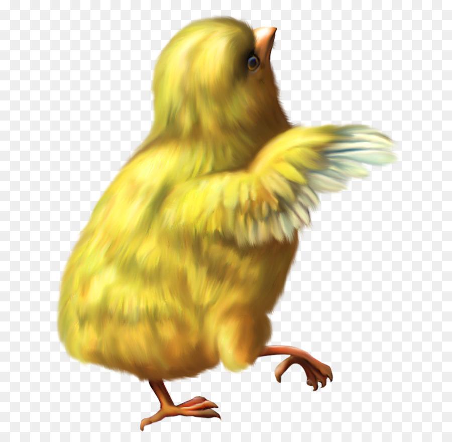 Fried Chicken clipart.