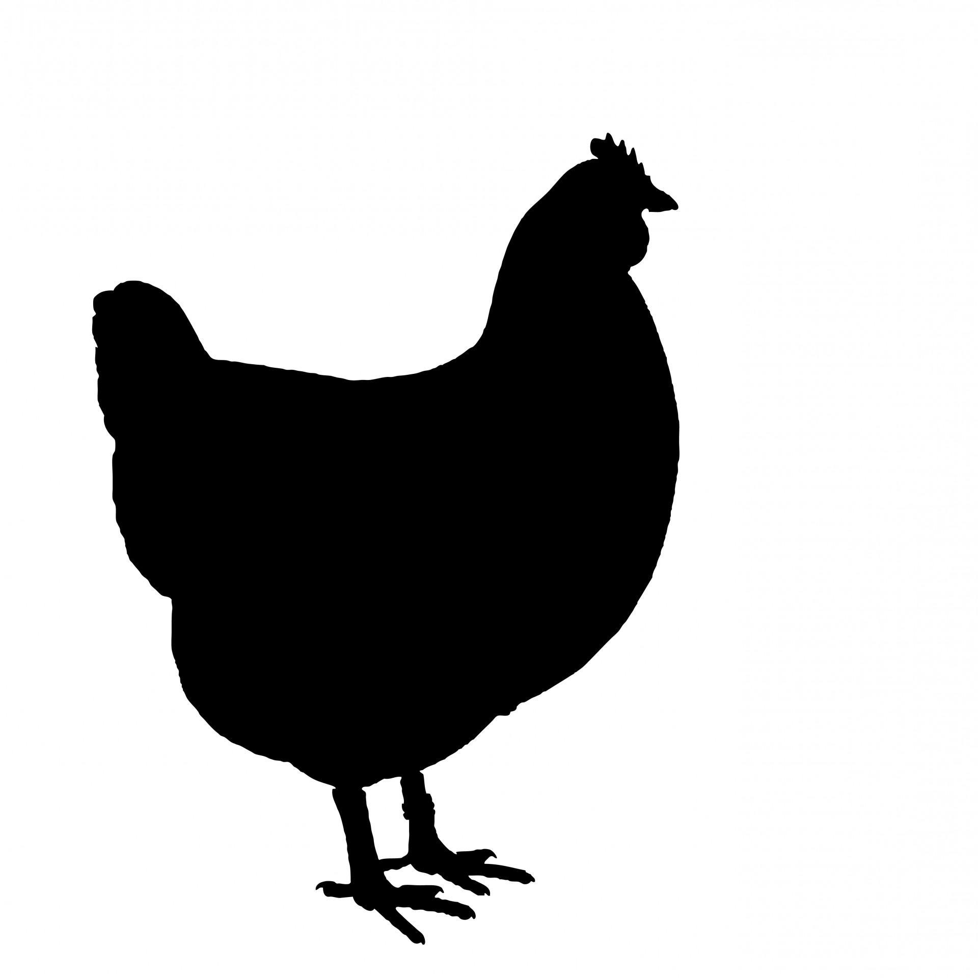 Silhouette Clipart Free Chicken.