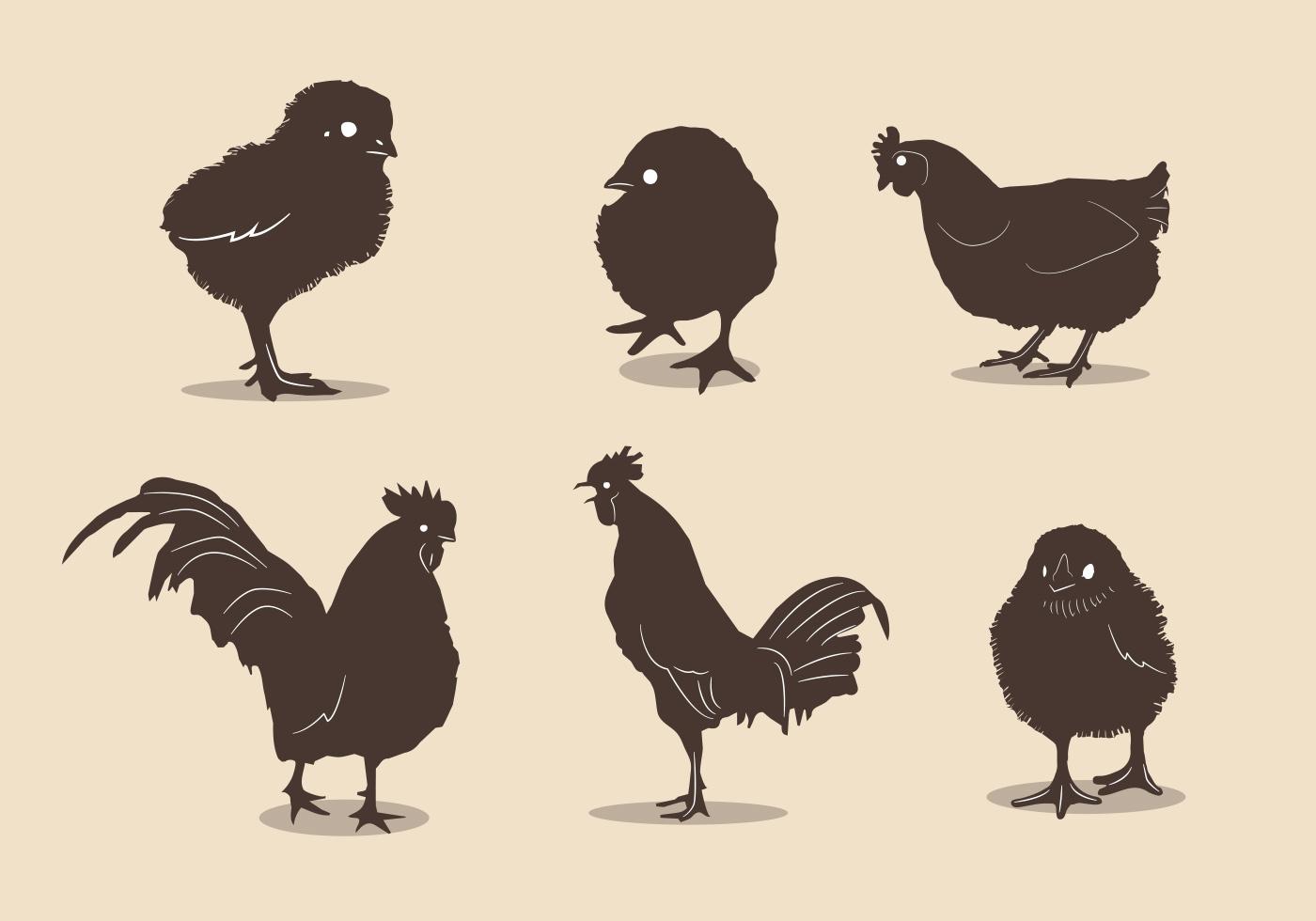 Chicken Free Vector Art.