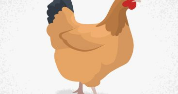 Chicken Vector Png Archives.