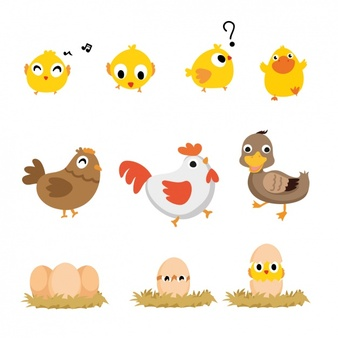 Chicken Vectors, Photos and PSD files.