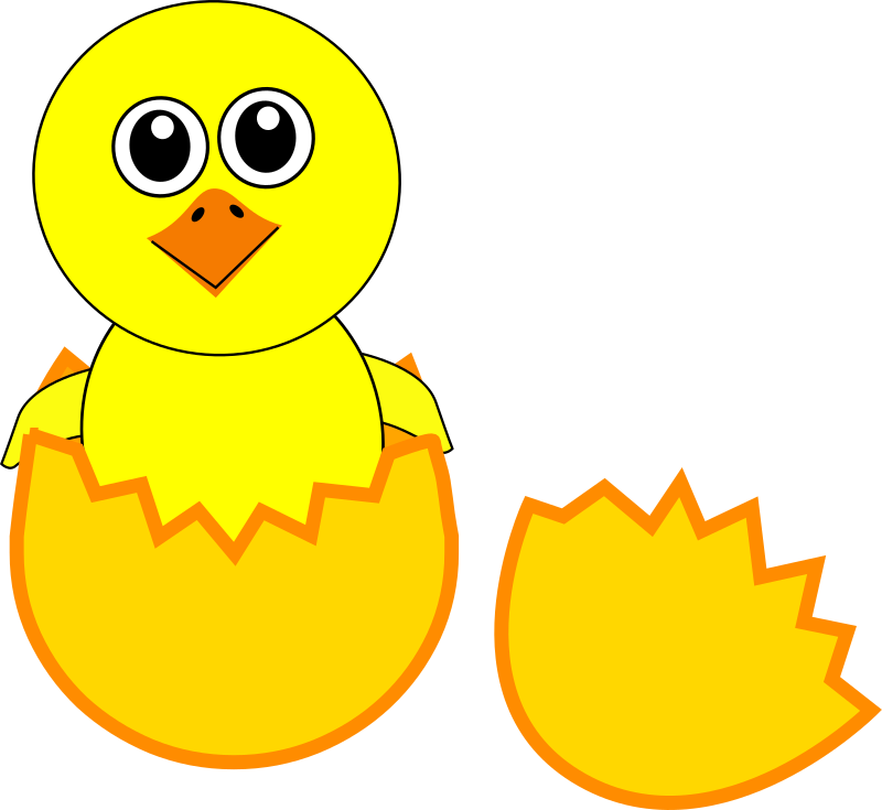 Chicks clipart #17