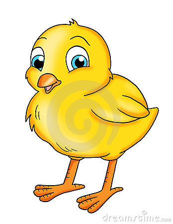Baby Chick Stock Illustrations.