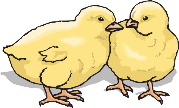 Chicks clipart #19