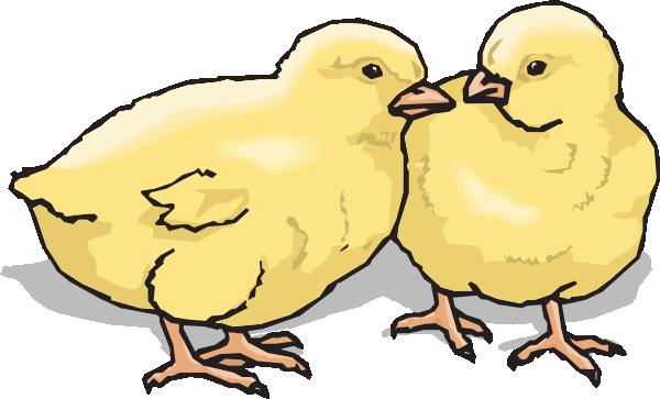 Chicks clipart #19