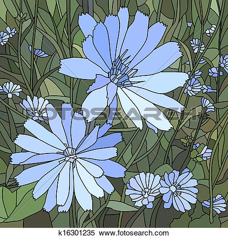 Clipart of Vector illustration of chicory. k16301235.