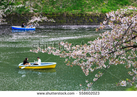 Chidori is the cherry blossoms clipart #13