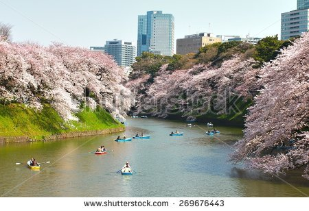 Cherryblossom Stock Photos, Royalty.