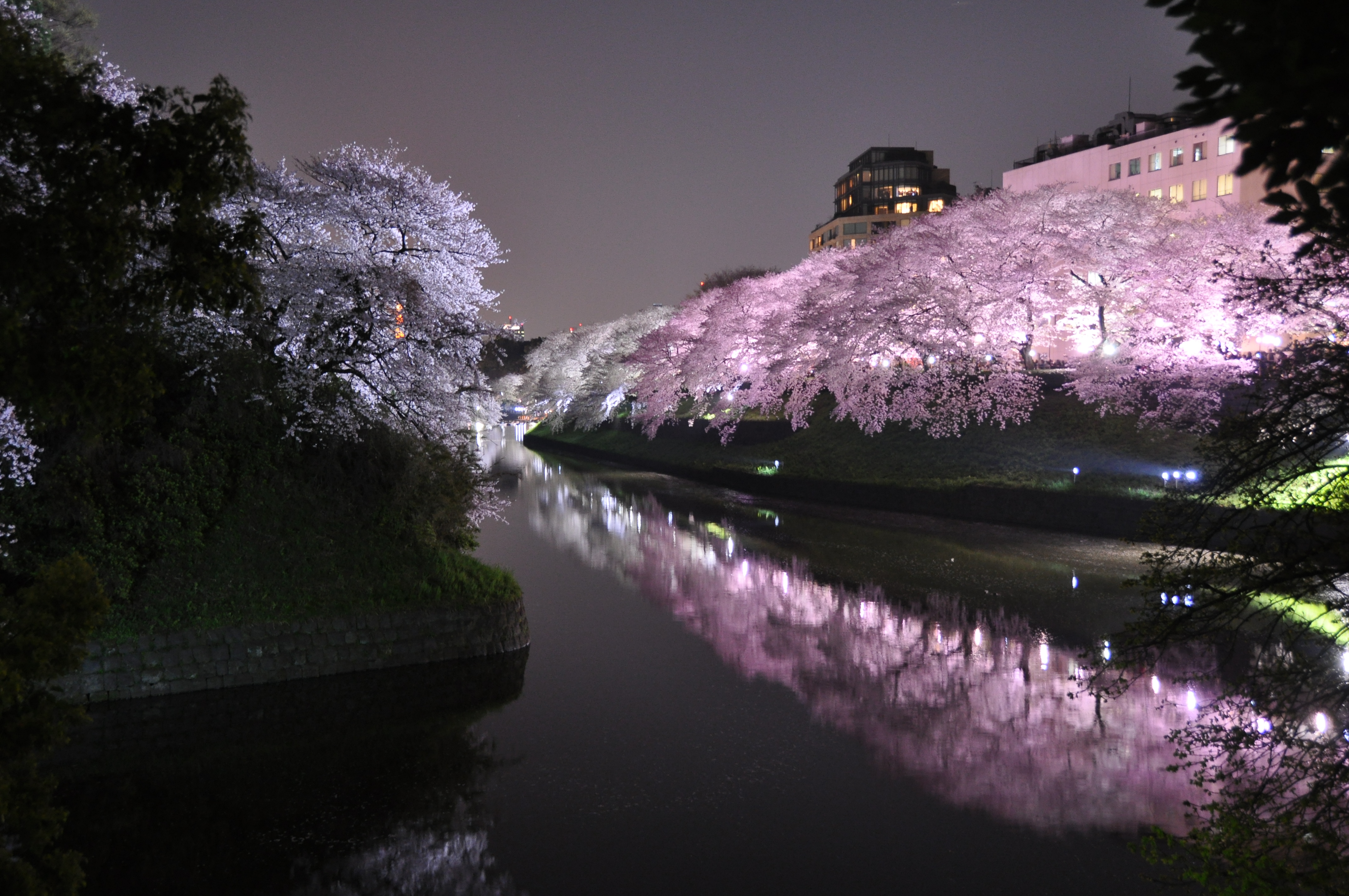 Tokyo Sakura Spots: Top Cherry Blossom Viewing in the City.
