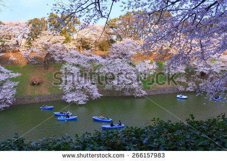 Chidori is the cherry blossoms clipart #19
