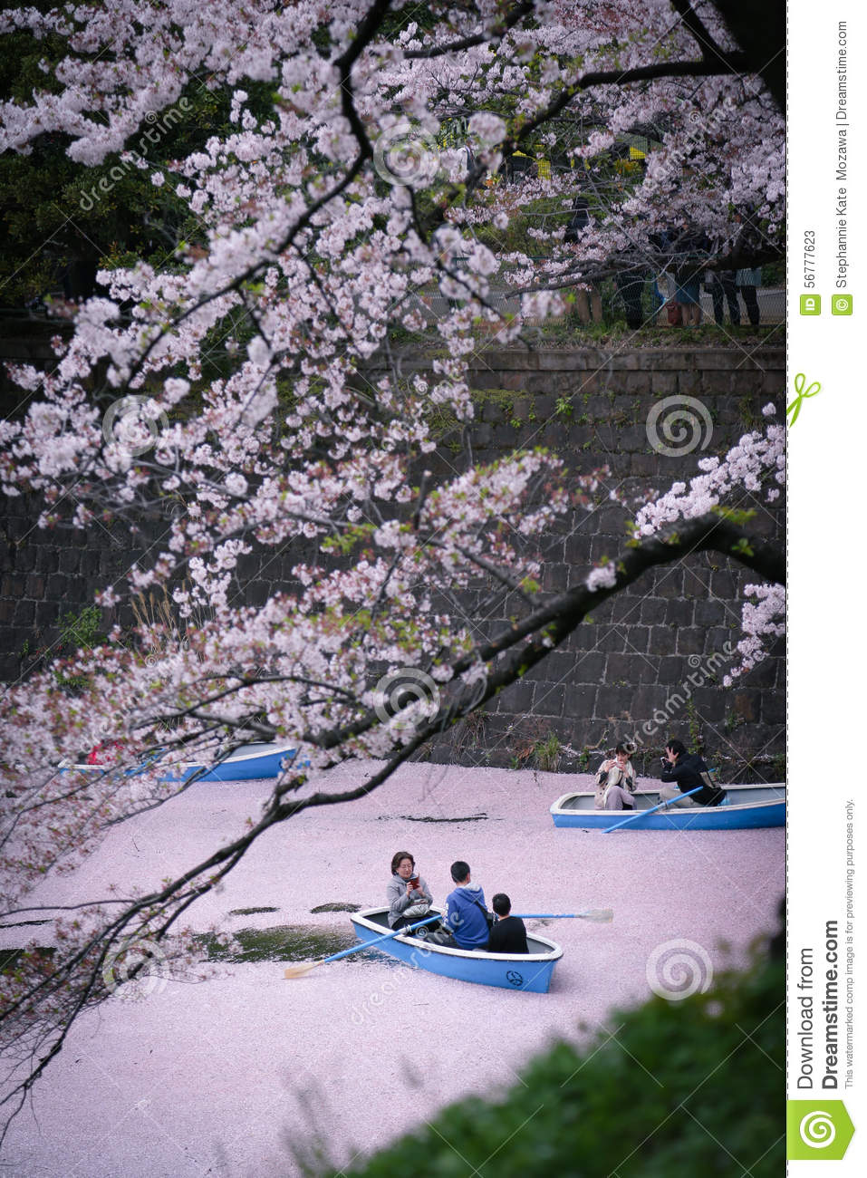 Cherry Blossoms: Calm Riverboat Ride In Pink River Editorial Stock.