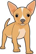 Chihuahua clipart #8