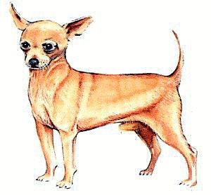 Chihuahua Clipart.