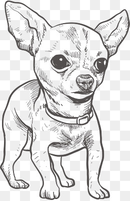 Chihuahua Png Black And White & Free Chihuahua Black And White.png.