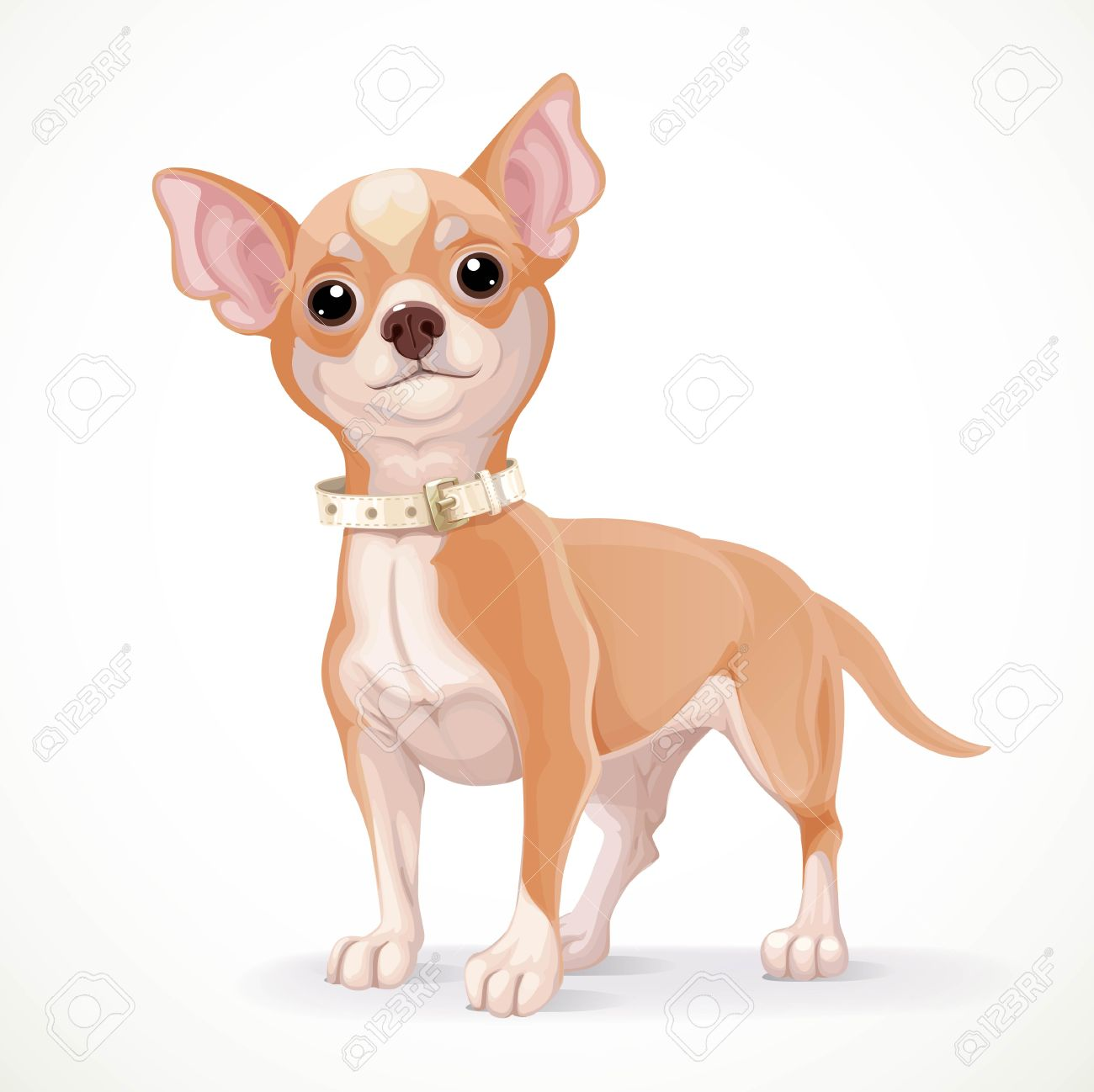 Cute little chihuahua dog vector illustration isolated on white...