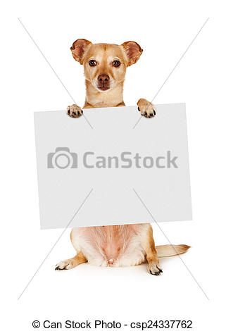 Stock Image of Chihuahua Mix Dog Holding Blank Sign.