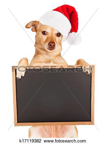 Stock Photo of Chihuahua mix Santa hat and blank sign k17119382.