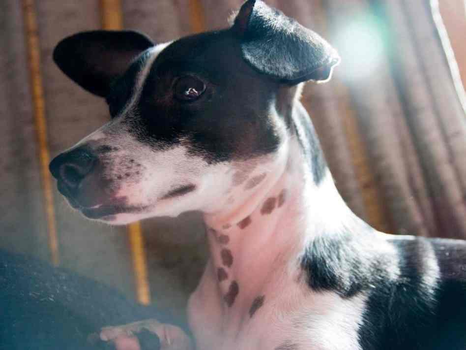 maltese puppy clipart › ggfrg.info.
