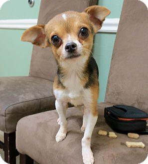 Chiwawa beagle mix dog clipart.