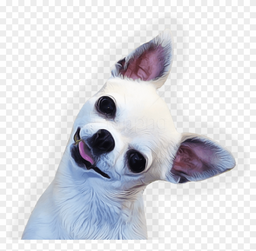 Download Chihuahua Face Side Png Images Background.