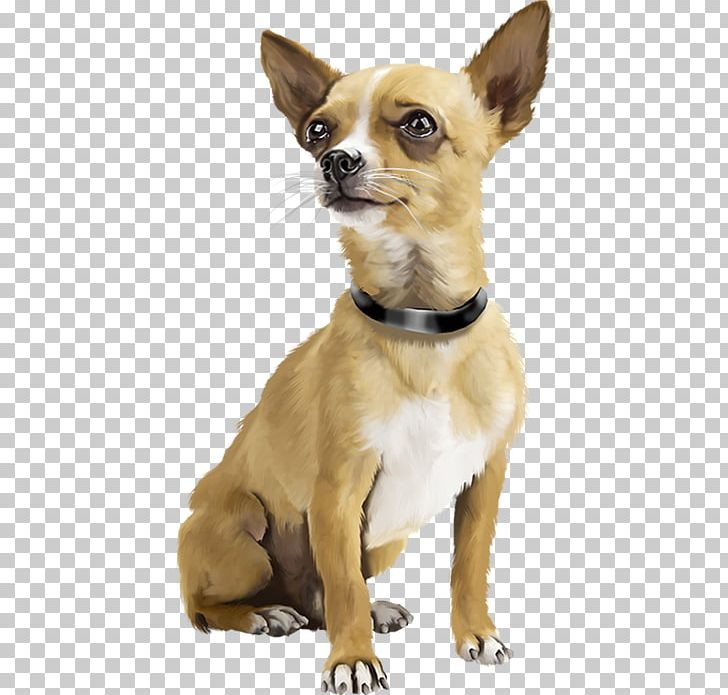 Chihuahua Puppy Dogs Active Miniature Pinscher Bark PNG, Clipart.