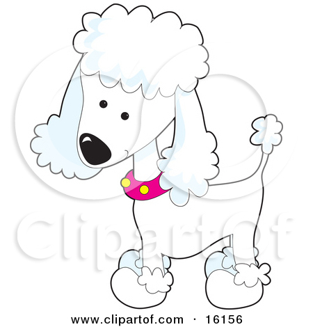 Chihuahua poodle mix clipart #5