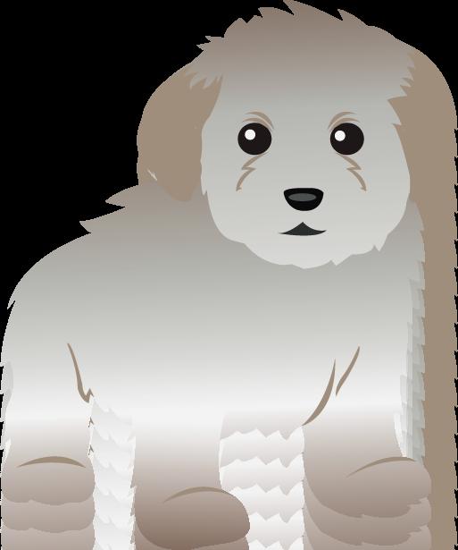 Miniature poodle clipart.