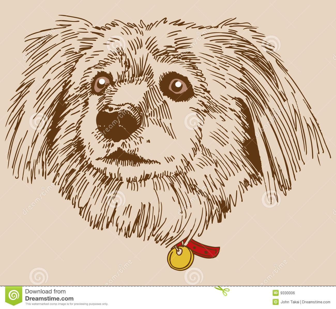Terrier.