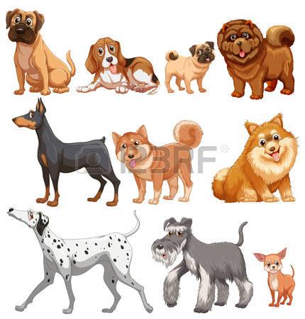 1,564 Chihuahua Cliparts, Stock Vector And Royalty Free Chihuahua.