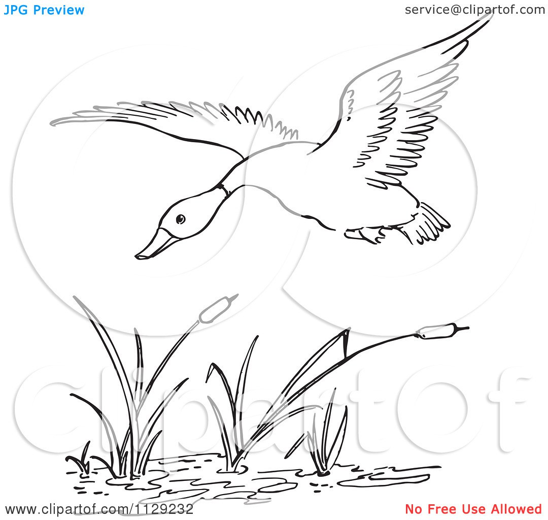 duck pond coloring pages coloring pages. file a3 southern painted.