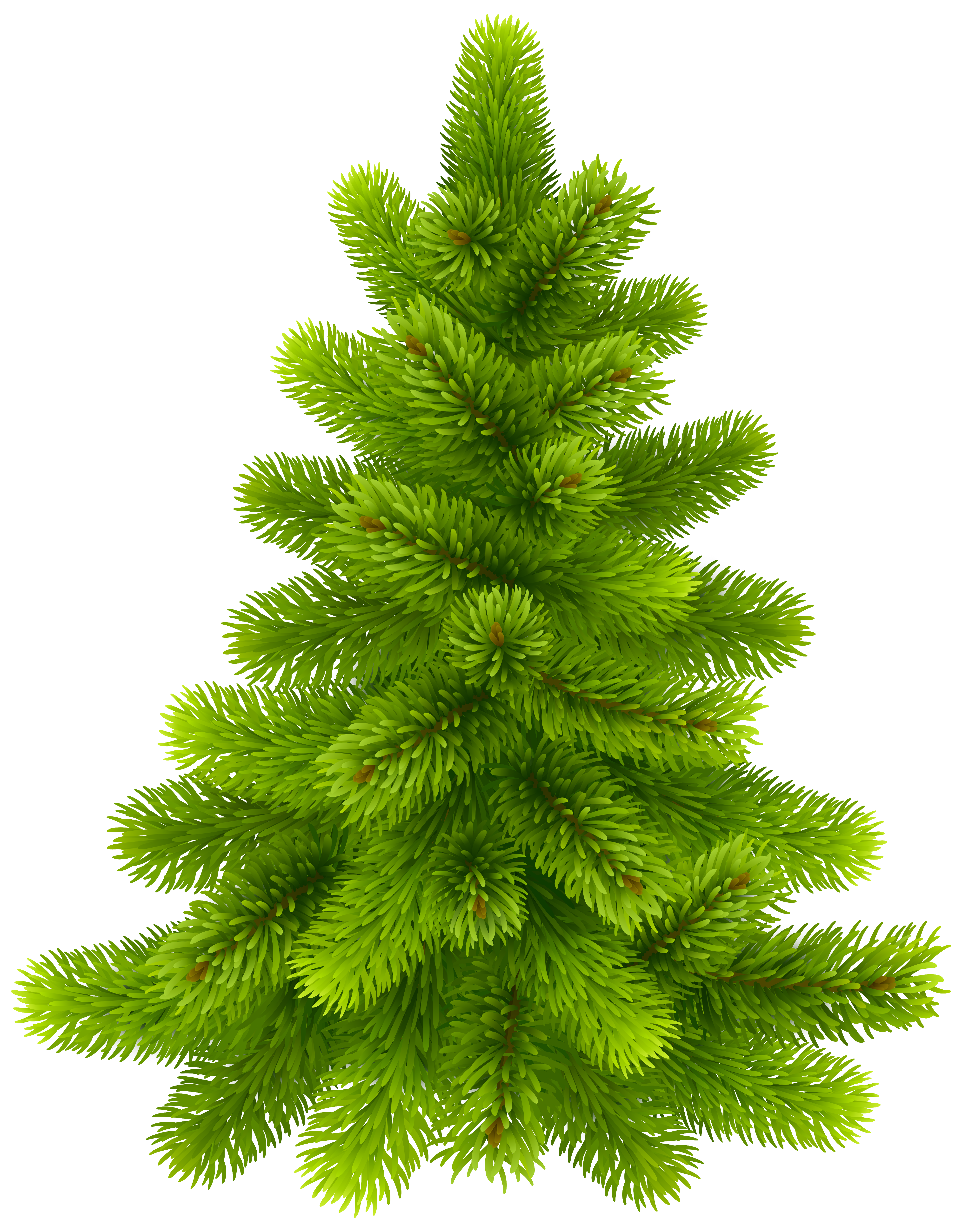 Pine Tree PNG Clip Art.