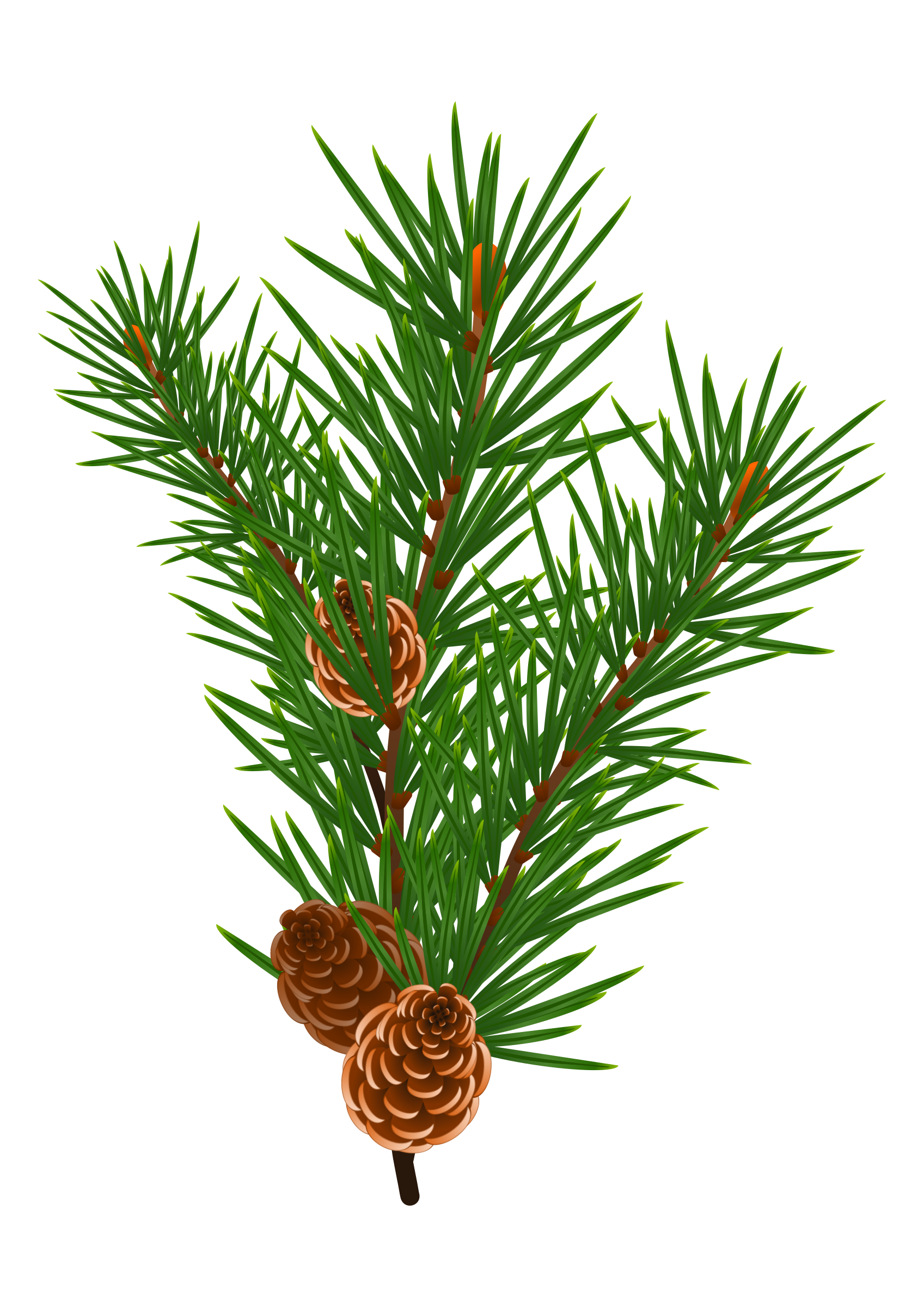 Pine Branch with Pine Cones Vector Clipart.